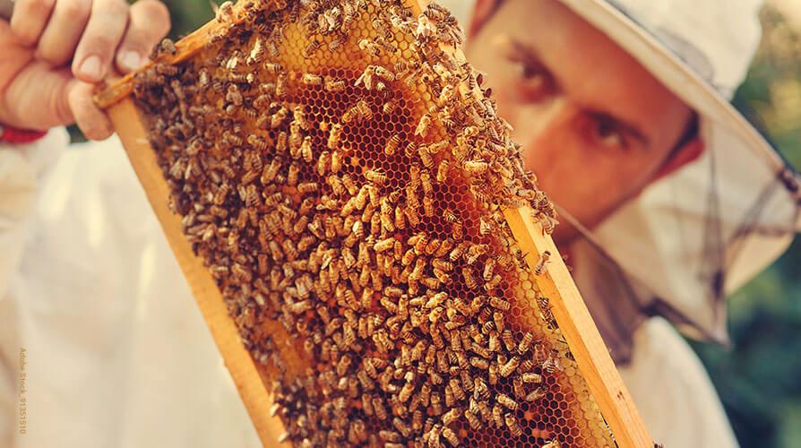 Bienen-Journal Shop