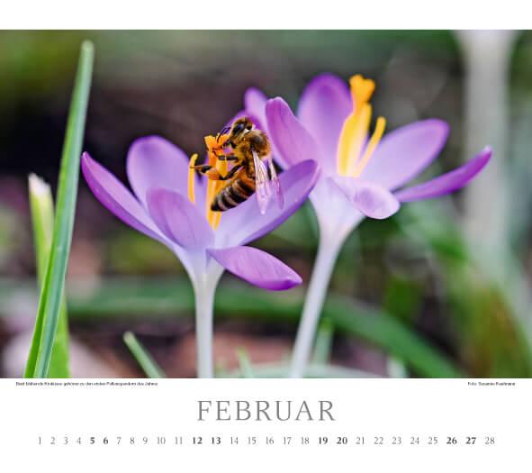 Fotokalender Deutsches Bienen-Journal 2022